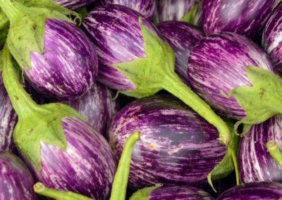FS eggplant 1500 q35